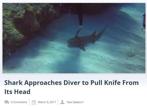 サメの頭部に刺さったナイフを抜くダイバー(出典:http://mysteriousuniverse.org)