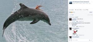 【海外発!Breaking News】「食べないで~」イルカに必死でしがみ付くタコ(豪)