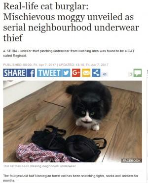 【海外発!Breaking News】下着ドロボーを繰り返す猫 飼い主はヒヤヒヤ(英)