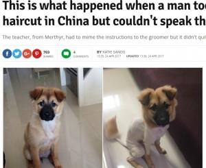 【海外発!Breaking News】中国で犬のトリミング 言葉通じず仕上がりにビックリ!