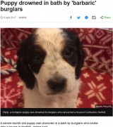 【海外発!Breaking News】非情な強盗 生後7か月の仔犬を浴槽で溺死させる(英)