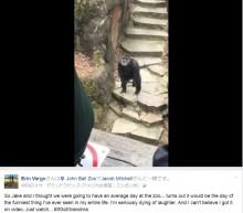 【海外発!Breaking News】チンパンジーが投げつけた糞便、見学者の顔に命中 米・動物園で<動画あり>