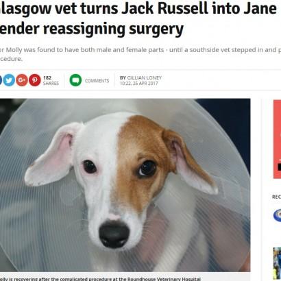 【海外発!Breaking News】「この子は両性具有かも」飼い主の勘バッチリ メス犬が性器切除手術を受ける(スコットランド)