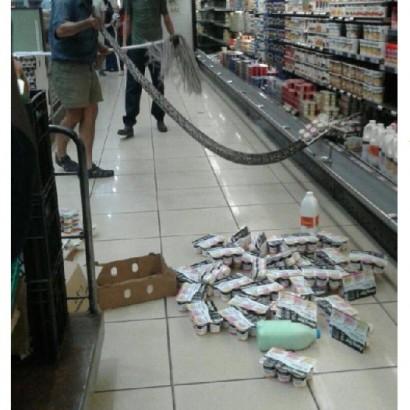 【海外発!Breaking News】全長3.6メートルのヘビ スーパーの冷蔵ケースで捕獲(南ア)
