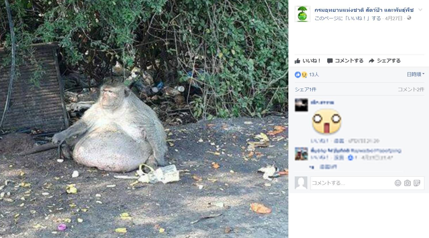 「太ったおじさん」とニックネームをつけられた猿(出典:https://www.facebook.com/DNP1362)