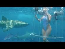 【海外発!Breaking News】フロリダ沖での撮影で米AV女優がサメに襲われる 流血映像も公開