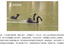 【海外発!Breaking News】上海の有名公園から連れ去られたコクチョウ 男2名が自宅で食べていた!