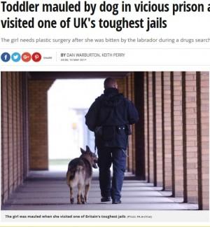 【海外発!Breaking News】刑務所で活躍する薬物探知犬、面会の幼児に襲いかかる(英)