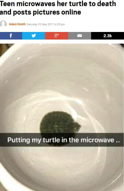 電子レンジに入れられたペットの亀(出典:http://metro.co.uk)