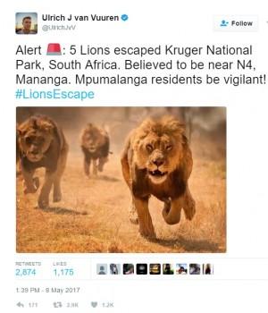 【海外発!Breaking News】雄ライオン5頭が国立公園から脱走(南ア)