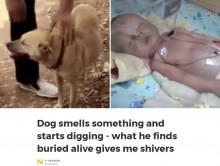 【海外発!Breaking News】森の中で生き埋めにされた赤ちゃん、犬が発見(中国)