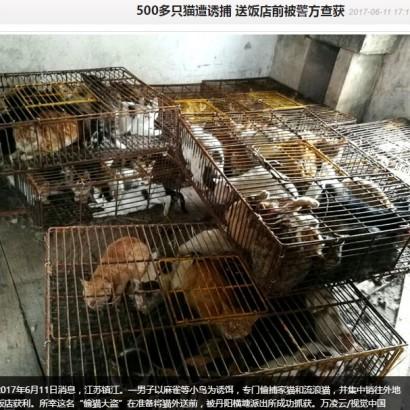 【海外発!Breaking News】毎年恒例「玉林犬肉祭り」への批判に沸く中国 江蘇省ではネコ500匹が保護
