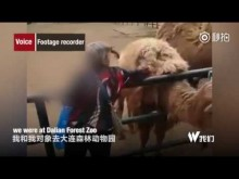 【海外発!Breaking News】動物園で女がラクダの毛をはぎバッグに詰め込む(中国)<動画あり>