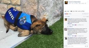 """【海外発!Breaking News】警察犬学校で落第した犬 """"大出世""""果たす(豪)"""