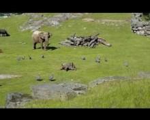 【海外発!Breaking News】鳥を追いかけ転んだ子象 ママのもとに駆け寄る姿が可愛すぎる<動画あり>