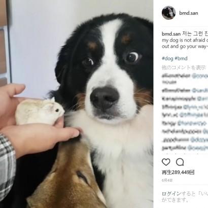 【海外発!Breaking News】犬にハムスターを突きつけ反応を面白がる飼い主に賛否両論(韓国)
