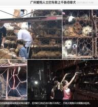 【海外発!Breaking News】ついに始まった「玉林犬肉祭り」 広東省の高速道路で1,300頭の犬を保護
