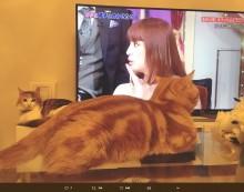 【エンタがビタミン♪】あゆ『しゃべくり』登場に猫も注目 根本弥生「今でも不思議な感じ…」