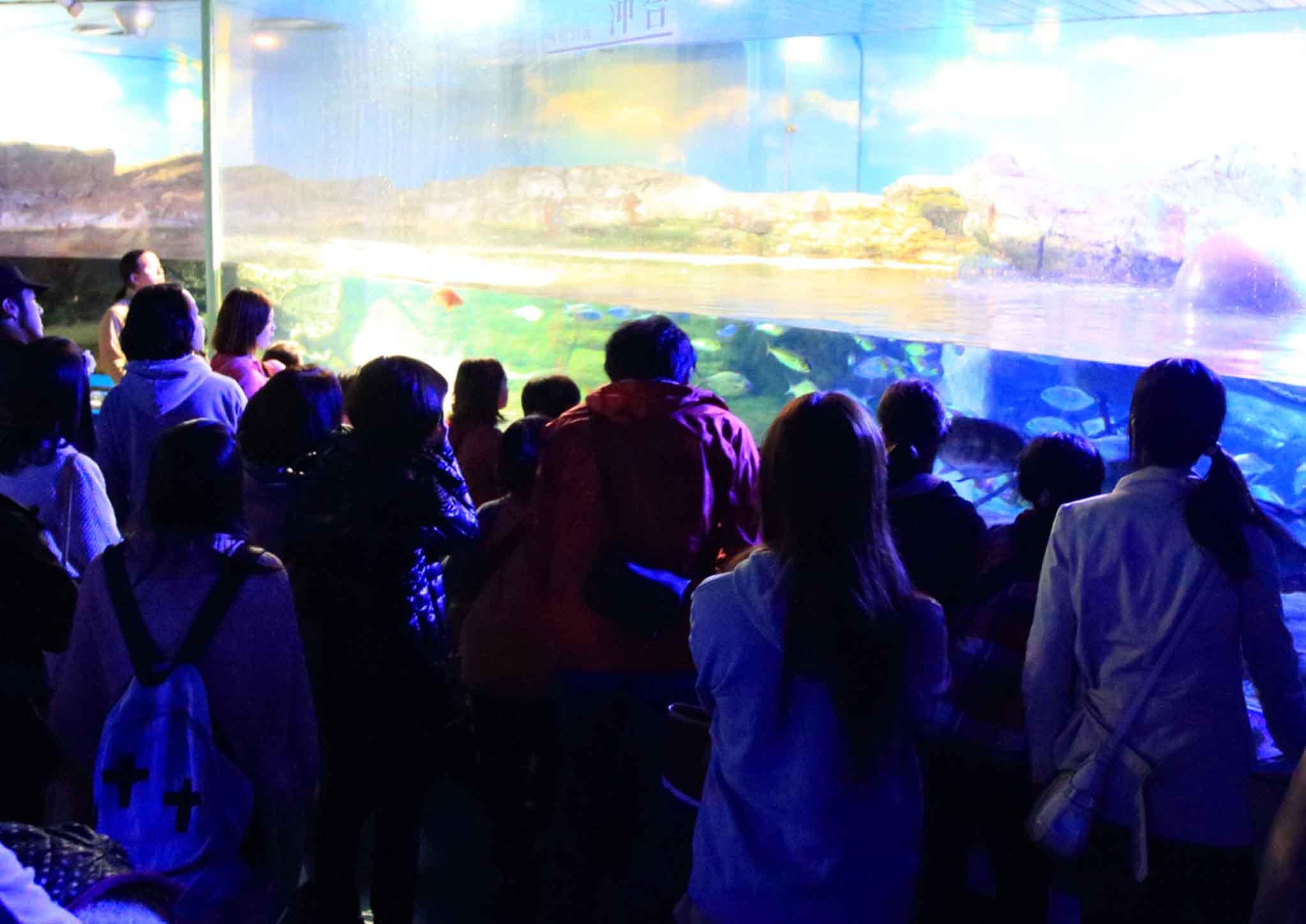 夜の水族館をワクワク探検 鴨川シーワールド「ナイトアドベンチャー」期間限定開催