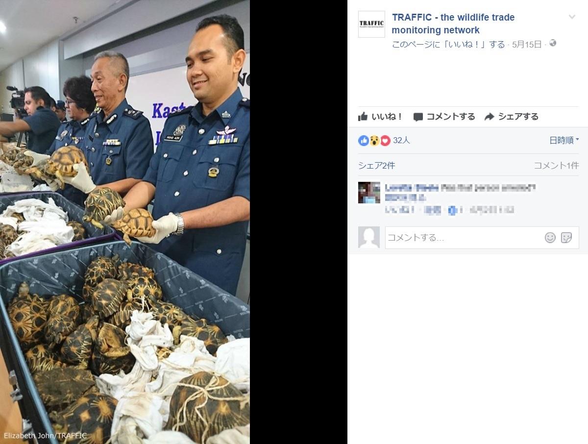 クアラルンプール国際空港で大量のカメが見つかる(画像は『TRAFFIC-the wildlife trade monitoring network 2017年5月15日付Facebook(Elizabeth John/TRAFFIC)』のスクリーンショット)