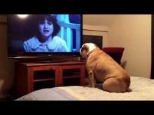 【海外発!Breaking News】犬の危険察知能力はやはり高い! ホラー映画でヒロインに危険が迫ると吠えて警告するブルドッグ<動画あり>