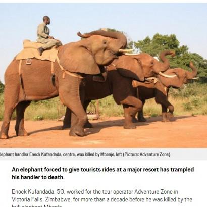 【海外発!Breaking News】「観光客を乗せて歩け」無理強いされた雄ゾウが大暴れ ハンドラーを死なせる(ジンバブエ)