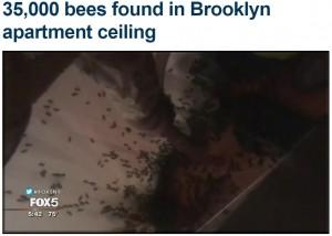 【海外発!Breaking News】アパート天井裏に3万5千匹のハチ! 採れた蜂蜜18kg以上(米)