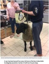 【海外発!Breaking News】羊を連れてスーパーに来た飼い主、入店拒否を告げられ大揉め(北アイルランド)