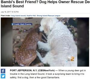 【海外発!Breaking News】海で溺れた子鹿をゴールデン・レトリバーが救出(米)<動画あり>