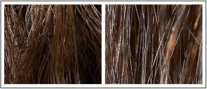 髪とロープ