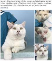 【海外発!Breaking News】目を開けない猫に二重まぶた手術 無事里親見つかる(中国)