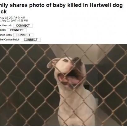 【海外発!Breaking News】祖母が飼っていたピットブル、1歳孫を噛み殺す(米)