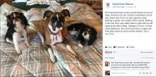 【海外発!Breaking News】交通事故後、行方不明になった2本足のボクサー犬 奇跡的に発見(米)<動画あり>