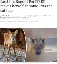【海外発!Breaking News】車に轢かれた子鹿、救助した男性のペットに(英)<動画あり>