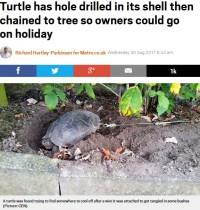 【海外発!Breaking News】ペットのカメの甲羅に穴を開けた飼い主、旅行中にワイヤーで繋ぎ庭に放置(独)