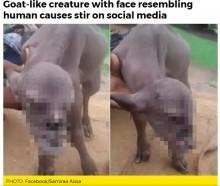【海外発!Breaking News】アゴのしゃくれた人面ヤギがインドに Facebook投稿で世界に拡散中