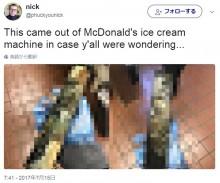 【海外発!Breaking News】米マクドナルドに激震 「クビ覚悟で実態バラす」ある従業員が衝撃写真を公開