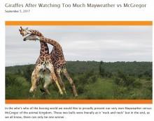 【海外発!Breaking News】迫力満点 首を叩きつける命懸けのキリンの喧嘩(南ア)<動画あり>