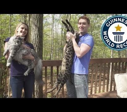 【海外発!Breaking News】ひとつ屋根の下で暮らす2匹の猫 それぞれギネス世界記録に認定(米)<動画あり>