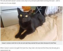 【海外発!Breaking News】「ノミがいるからもう要らない」獣医に猫の安楽死を頼んだ飼い主(英)