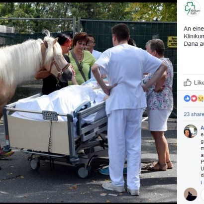 【海外発!Breaking News】「愛馬に会いたい…」女性患者の最期の願いを叶えた病院(独)