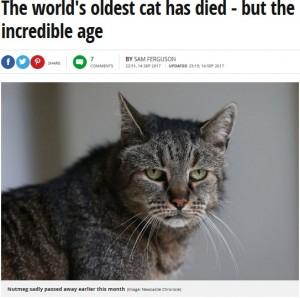 【海外発!Breaking News】世界一高齢とされるイギリスの32歳の猫、旅立つ