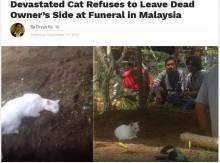 【海外発!Breaking News】飼い主を亡くした猫、墓地から離れず(マレーシア)