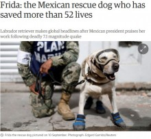 【海外発!Breaking News】メキシコ地震を含む52人以上の命を救った救助犬に称賛の嵐