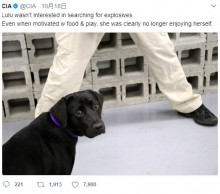 【海外発!Breaking News】CIAを解雇された訓練中の仔犬、今後を心配されるも幸せな生活を掴む(米)