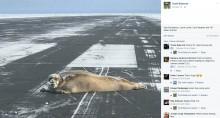 【海外発!Breaking News】アザラシが日向ぼっこ 米アラスカの空港滑走路で