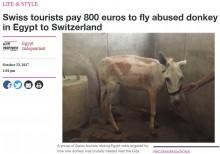 【海外発!Breaking News】虐待されたロバ スイス人旅行者達が飼い主から救出(エジプト)