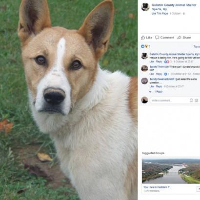 【海外発!Breaking News】2.7kgの腫瘍を抱え「安楽死させて」と捨てられた犬、手術が無事成功(米)