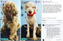 【海外発!Breaking News】飼育放棄された犬を緊急トリミング トリマーも大変身した姿に涙(米)