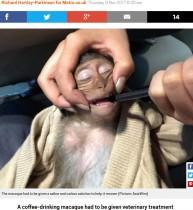 【海外発!Breaking News】旅行者のコーヒーを盗み飲みした猿、カフェイン過剰摂取で意識不明に(タイ)